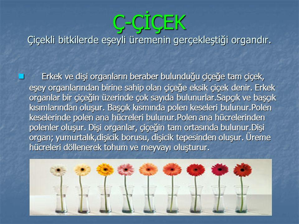 Ç-ÇİÇEK Çiçekli bitkilerde eşeyli üremenin gerçekleştiği organdır. Erkek ve dişi organların beraber bulunduğu çiçeğe tam çiçek, eşey organlarından bir