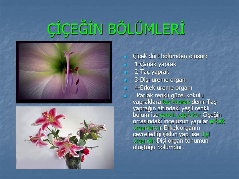 ÇİÇEĞİN BÖLÜMLERİ Çiçek dört bölümden oluşur: Çiçek dört bölümden oluşur: 1-Çanak yaprak 1-Çanak yaprak 2-Taç yaprak 2-Taç yaprak 3-Dişi üreme organı 3-Dişi üreme organı 4-Erkek üreme organı 4-Erkek üreme organı Parlak renkli,güzel kokulu yapraklara taç yaprak denir.Taç yaprağın altındaki yeşil renkli bölüm ise çanak yapraktır.Çiçeğin ortasındaki ince,uzun yapılar erkek organlardır.Erkek organın çevrelediği şişkin yapı ise dişi organdır.Dişi organ tohumun oluştuğu bölümdür.