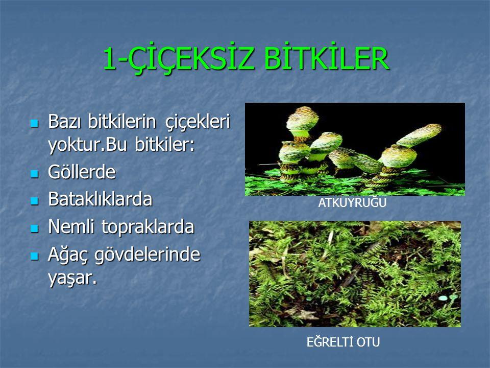 1-ÇİÇEKSİZ BİTKİLER Bazı bitkilerin çiçekleri yoktur.Bu bitkiler: Bazı bitkilerin çiçekleri yoktur.Bu bitkiler: Göllerde Göllerde Bataklıklarda Bataklıklarda Nemli topraklarda Nemli topraklarda Ağaç gövdelerinde yaşar.