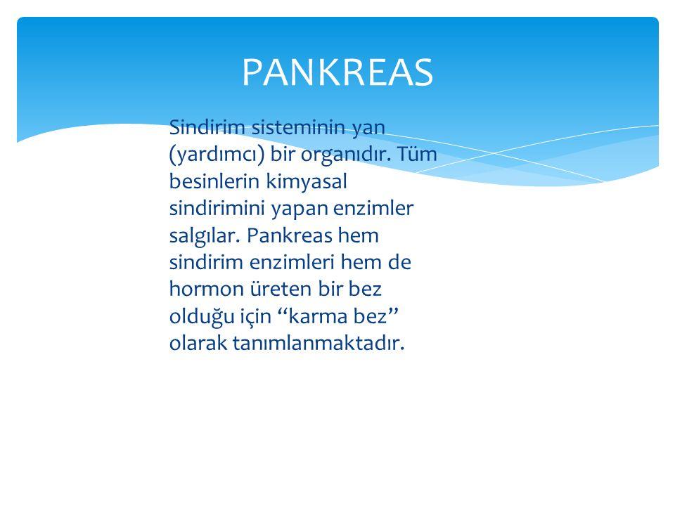 Sindirim sisteminin yan (yardımcı) bir organıdır. Tüm besinlerin kimyasal sindirimini yapan enzimler salgılar. Pankreas hem sindirim enzimleri hem de