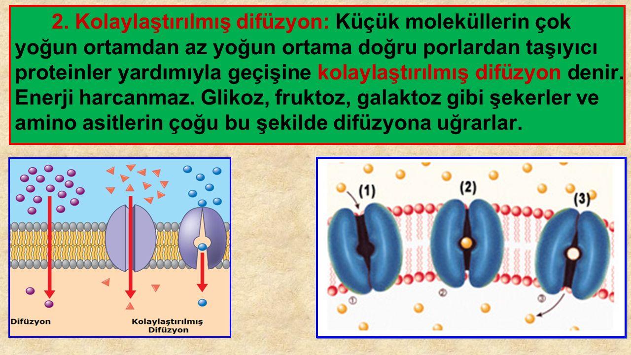 2. Kolaylaştırılmış Difüzyon: 2. Kolaylaştırılmış difüzyon: Küçük moleküllerin çok yoğun ortamdan az yoğun ortama doğru porlardan taşıyıcı proteinler