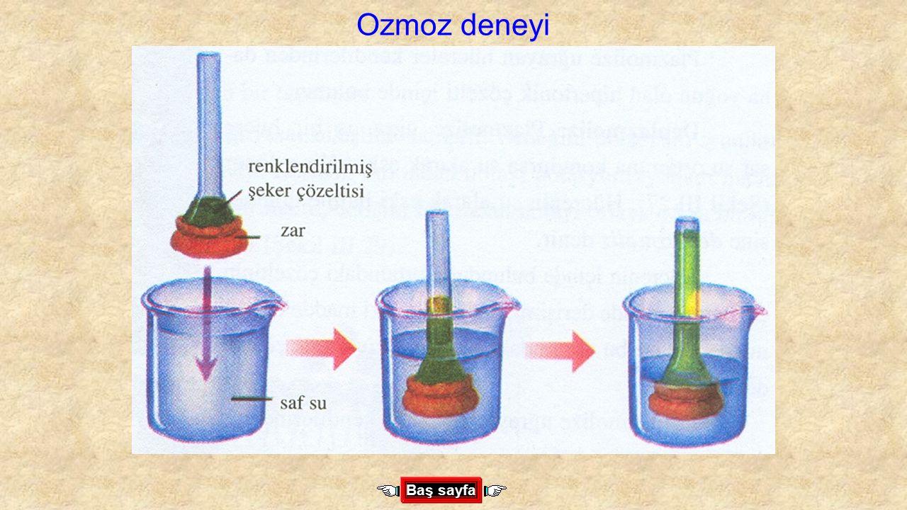 Ozmoz deneyi Baş sayfa