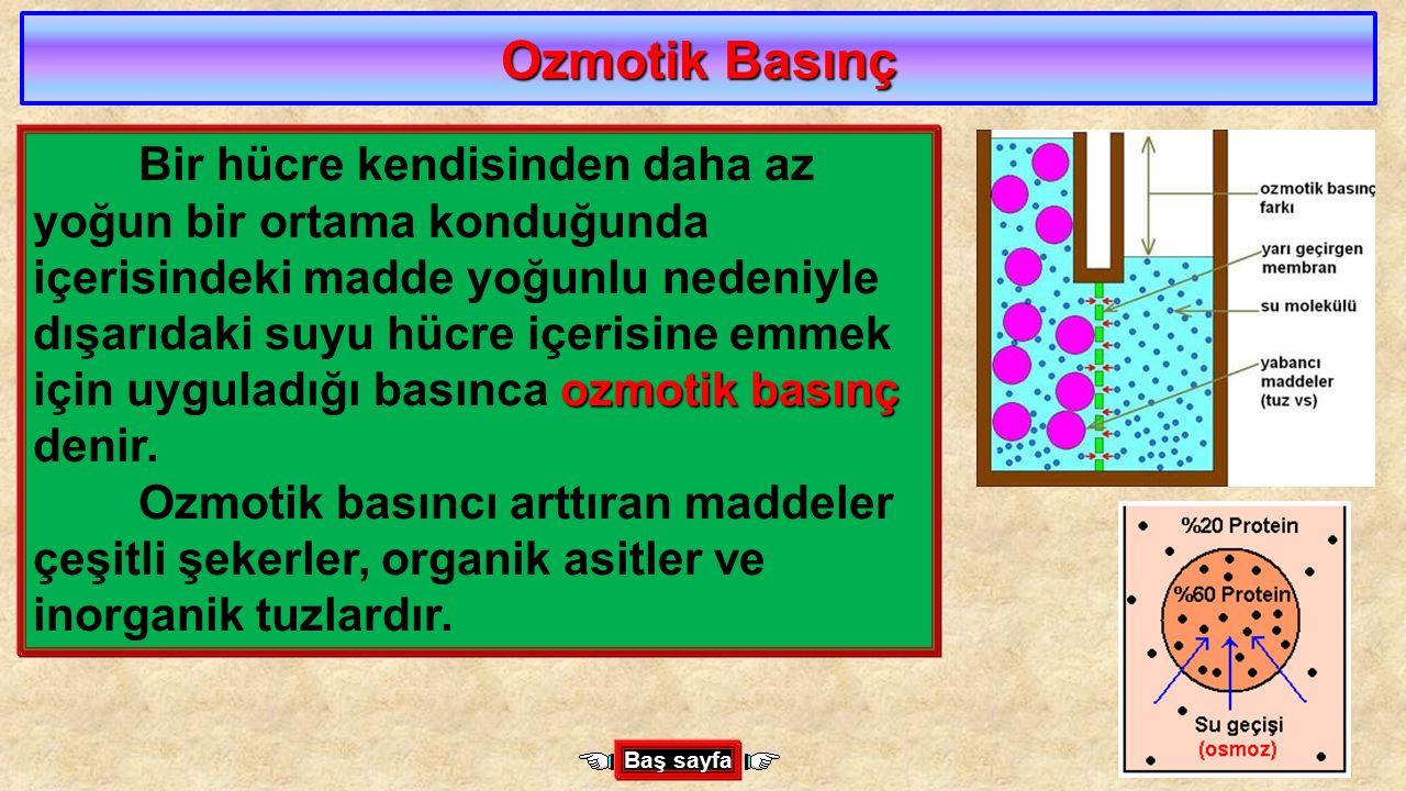 Ozmotik Basınç ozmotik basınç Bir hücre kendisinden daha az yoğun bir ortama konduğunda içerisindeki madde yoğunlu nedeniyle dışarıdaki suyu hücre içe