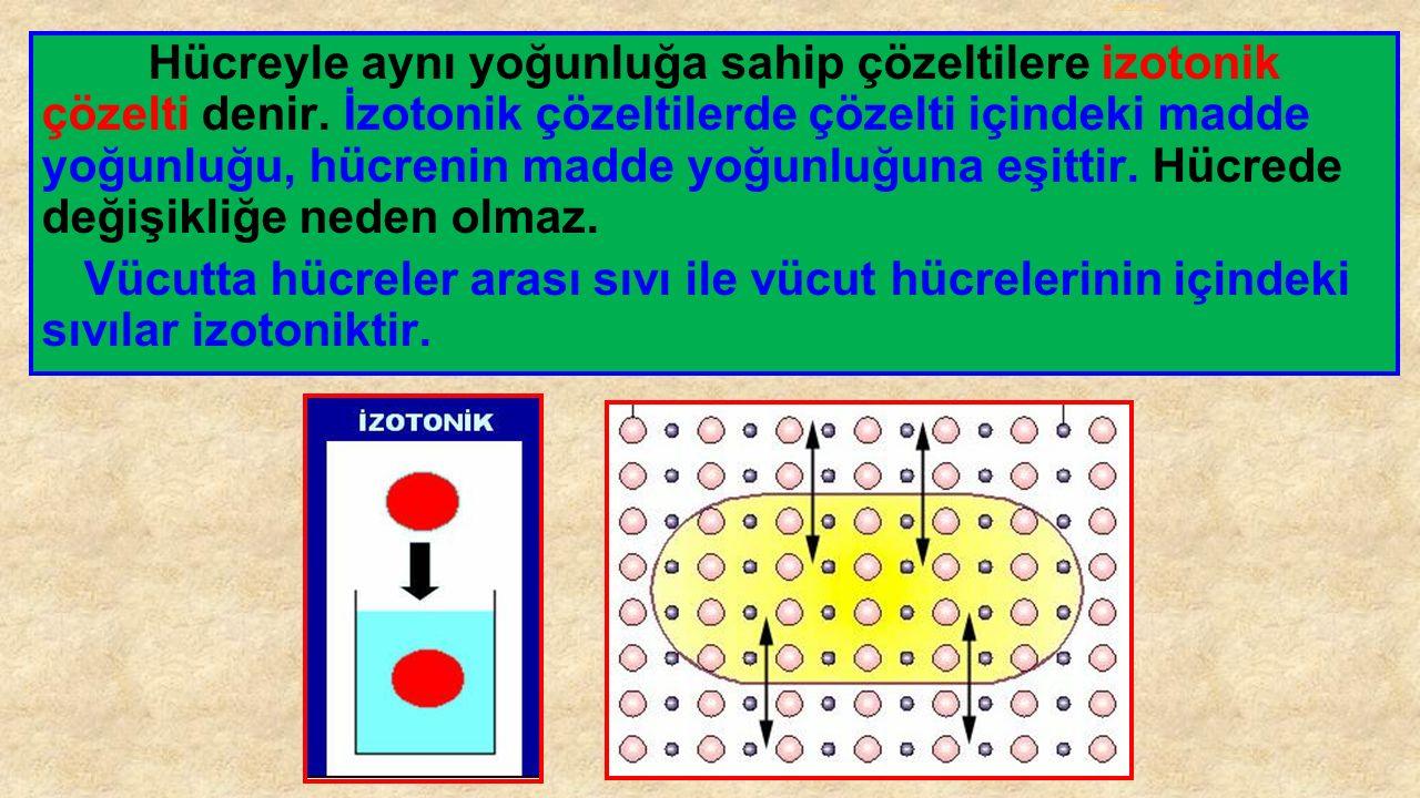 izotonik ortam Hücreyle aynı yoğunluğa sahip çözeltilere izotonik çözelti denir. İzotonik çözeltilerde çözelti içindeki madde yoğunluğu, hücrenin madd