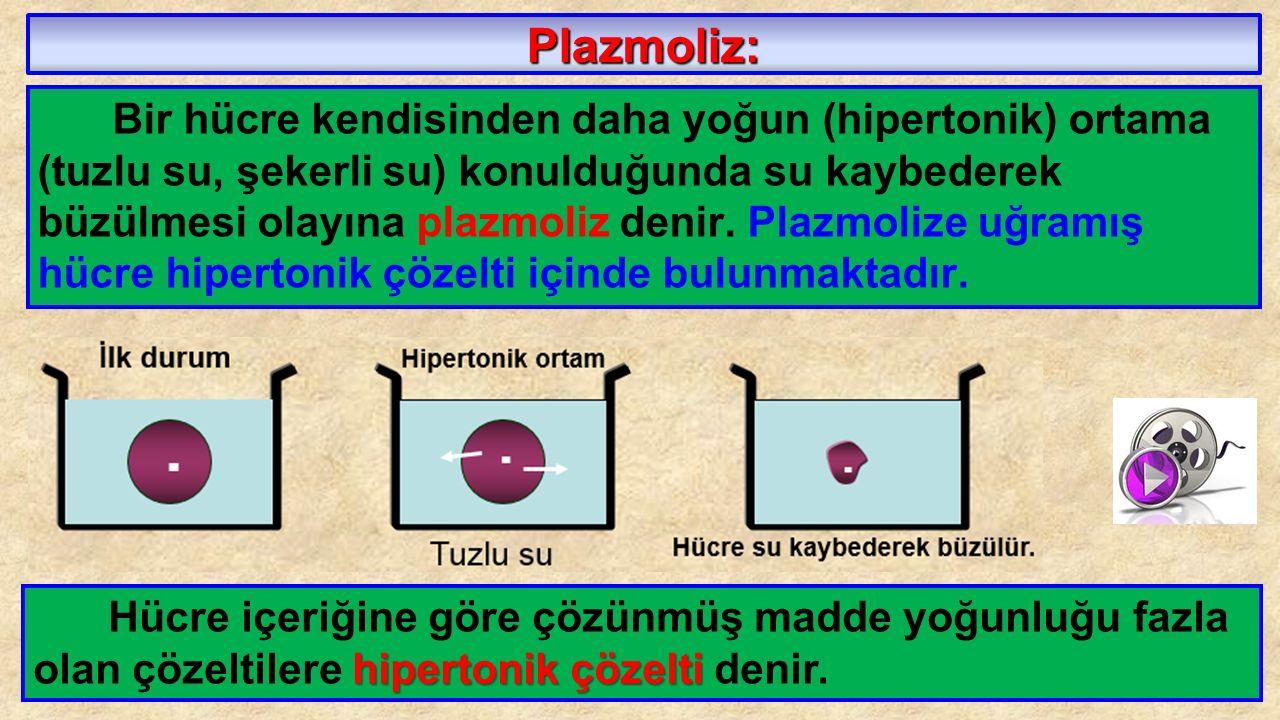 Plazmoliz: Bir hücre kendisinden daha yoğun (hipertonik) ortama (tuzlu su, şekerli su) konulduğunda su kaybederek büzülmesi olayına plazmoliz denir. P