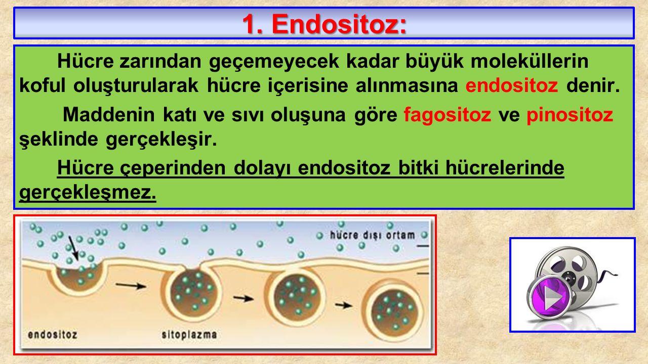 1. Endositoz: Hücre zarından geçemeyecek kadar büyük moleküllerin koful oluşturularak hücre içerisine alınmasına endositoz denir. Maddenin katı ve sıv