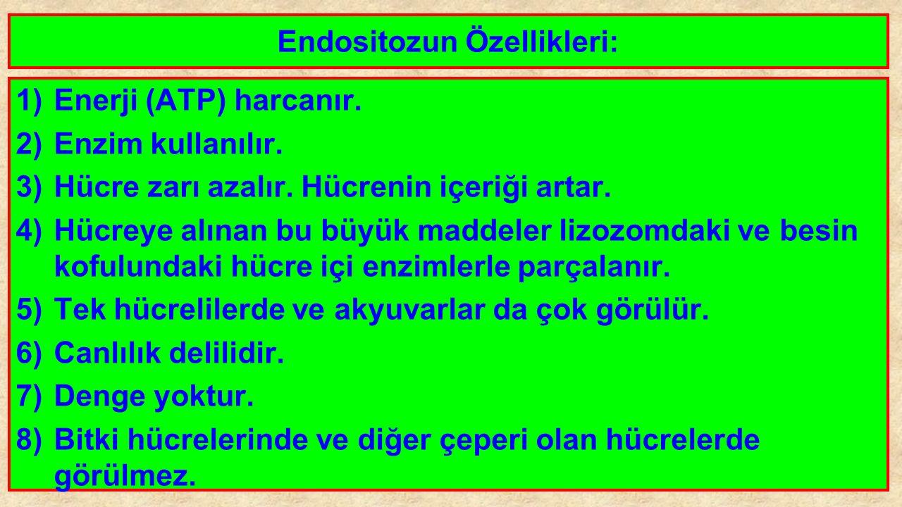 Endositozun Özellikleri: 1)Enerji (ATP) harcanır. 2)Enzim kullanılır. 3)Hücre zarı azalır. Hücrenin içeriği artar. 4)Hücreye alınan bu büyük maddeler