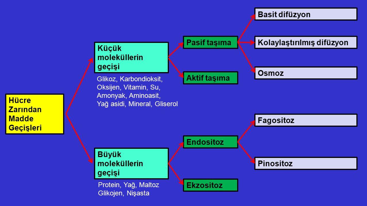 Değerlendirme soruları 1.Gelişmiş organizasyonlu tipik bir bitki hücresinde aşağıda verilenlerin hangisi bulunmaz.
