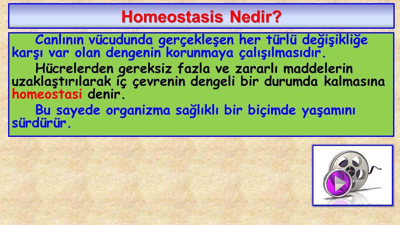 Homeostasis Nedir? Canlının vücudunda gerçekleşen her türlü değişikliğe karşı var olan dengenin korunmaya çalışılmasıdır. Hücrelerden gereksiz fazla v