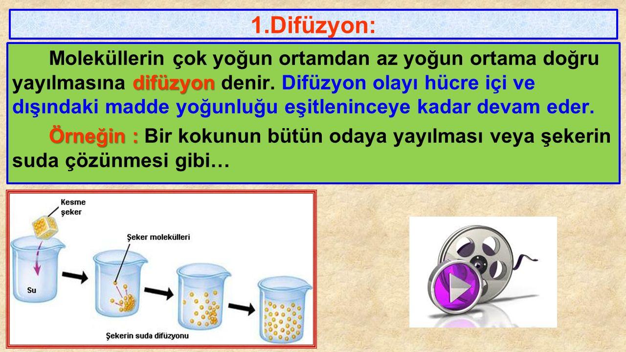 4.İnsan kanına, hipertonik (yoğun) bir serum verilirse hangisi gözlenmez .