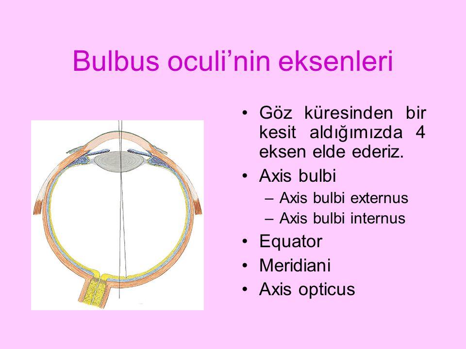 Bulbus oculi'nin eksenleri Göz küresinden bir kesit aldığımızda 4 eksen elde ederiz. Axis bulbi –Axis bulbi externus –Axis bulbi internus Equator Meri