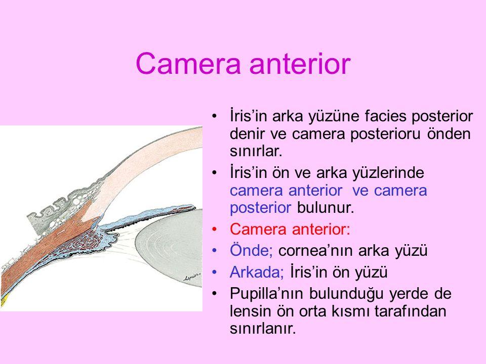 Camera anterior İris'in arka yüzüne facies posterior denir ve camera posterioru önden sınırlar. İris'in ön ve arka yüzlerinde camera anterior ve camer
