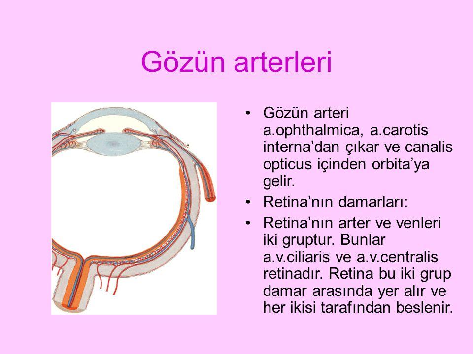 Gözün arterleri Gözün arteri a.ophthalmica, a.carotis interna'dan çıkar ve canalis opticus içinden orbita'ya gelir. Retina'nın damarları: Retina'nın a