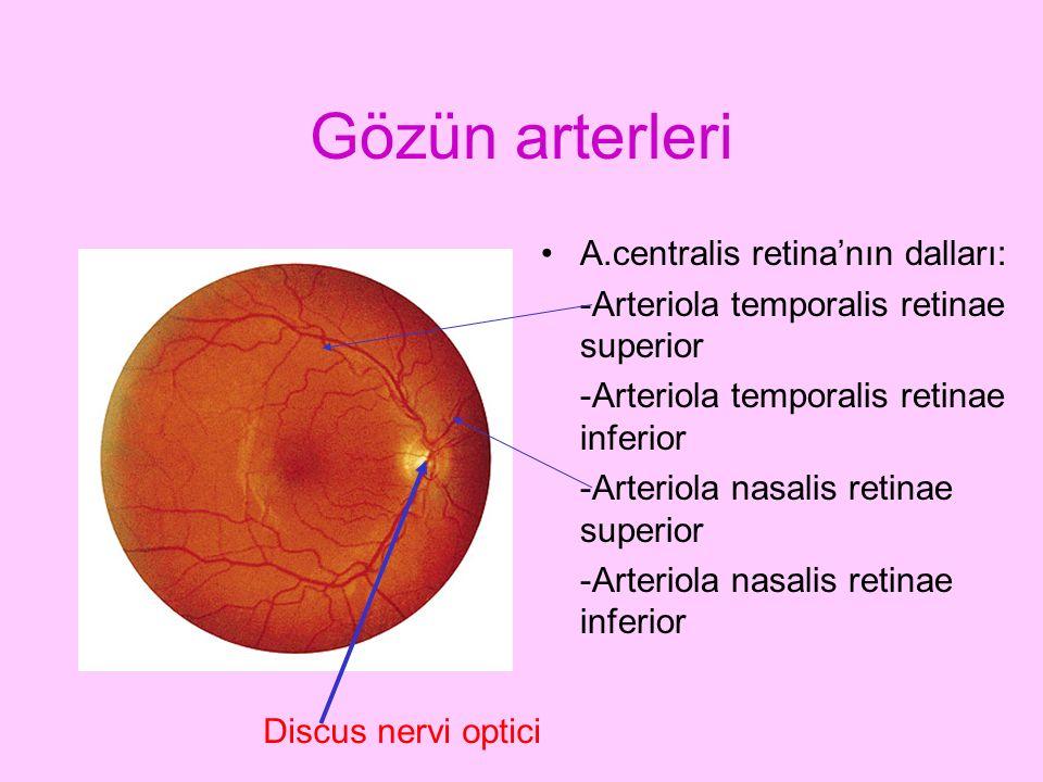 Gözün arterleri A.centralis retina'nın dalları: -Arteriola temporalis retinae superior -Arteriola temporalis retinae inferior -Arteriola nasalis retin
