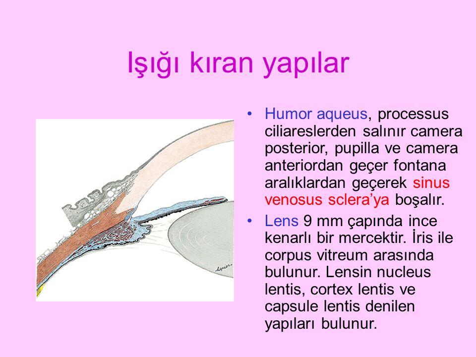 Işığı kıran yapılar Humor aqueus, processus ciliareslerden salınır camera posterior, pupilla ve camera anteriordan geçer fontana aralıklardan geçerek