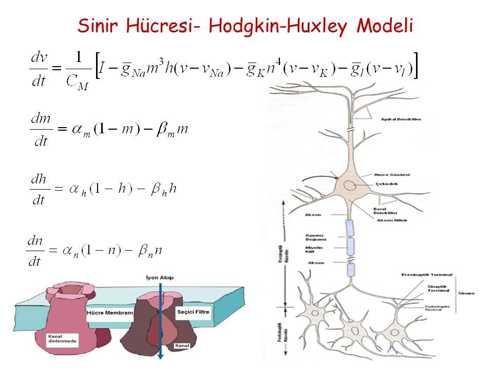 Sinir Hücresi- Hodgkin-Huxley Modeli