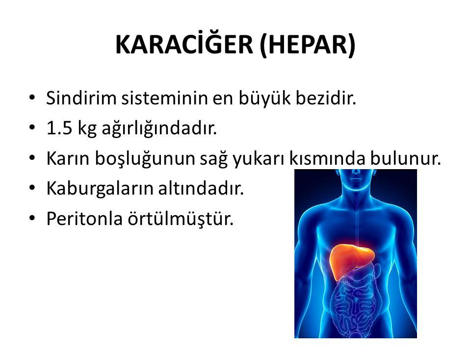 KARACİĞER (HEPAR) Sindirim sisteminin en büyük bezidir.