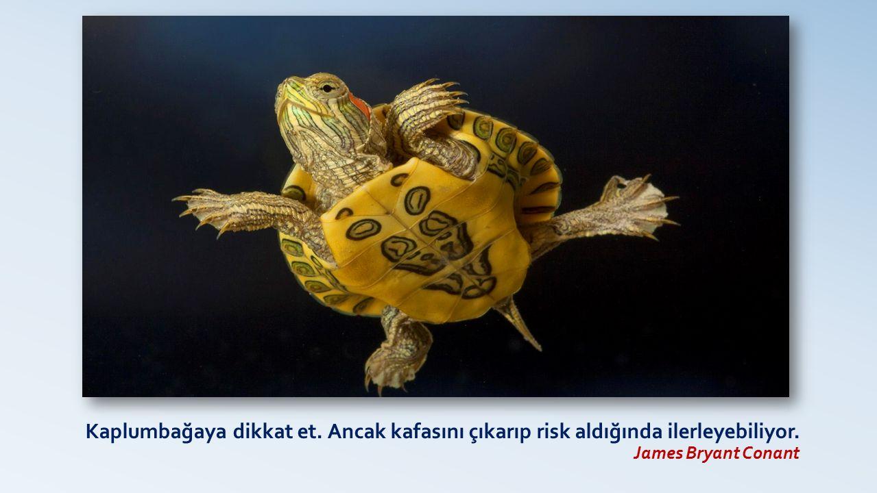Kaplumbağaya dikkat et. Ancak kafasını çıkarıp risk aldığında ilerleyebiliyor. James Bryant Conant