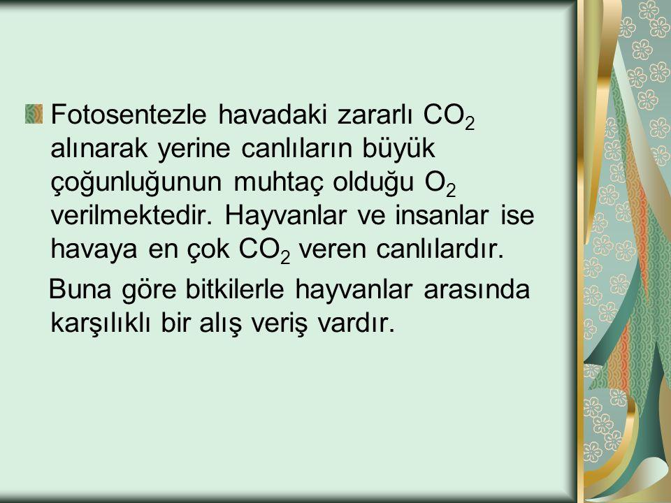 Fotosentezle havadaki zararlı CO 2 alınarak yerine canlıların büyük çoğunluğunun muhtaç olduğu O 2 verilmektedir. Hayvanlar ve insanlar ise havaya en