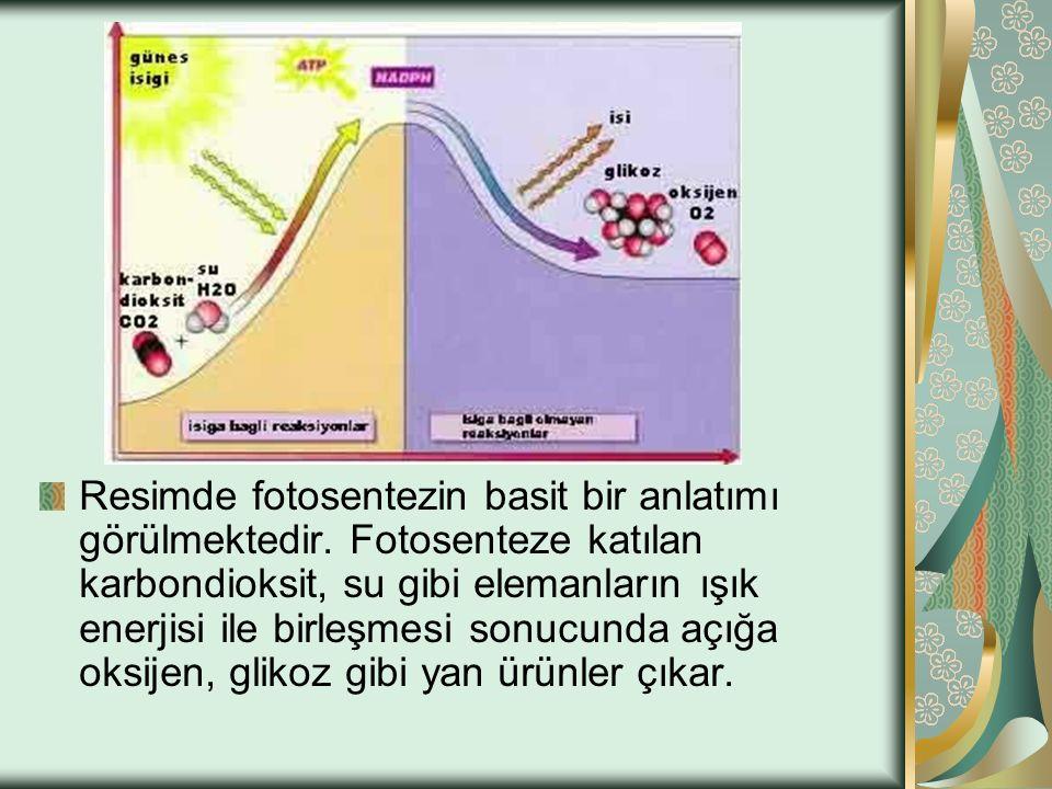 Resimde fotosentezin basit bir anlatımı görülmektedir. Fotosenteze katılan karbondioksit, su gibi elemanların ışık enerjisi ile birleşmesi sonucunda a