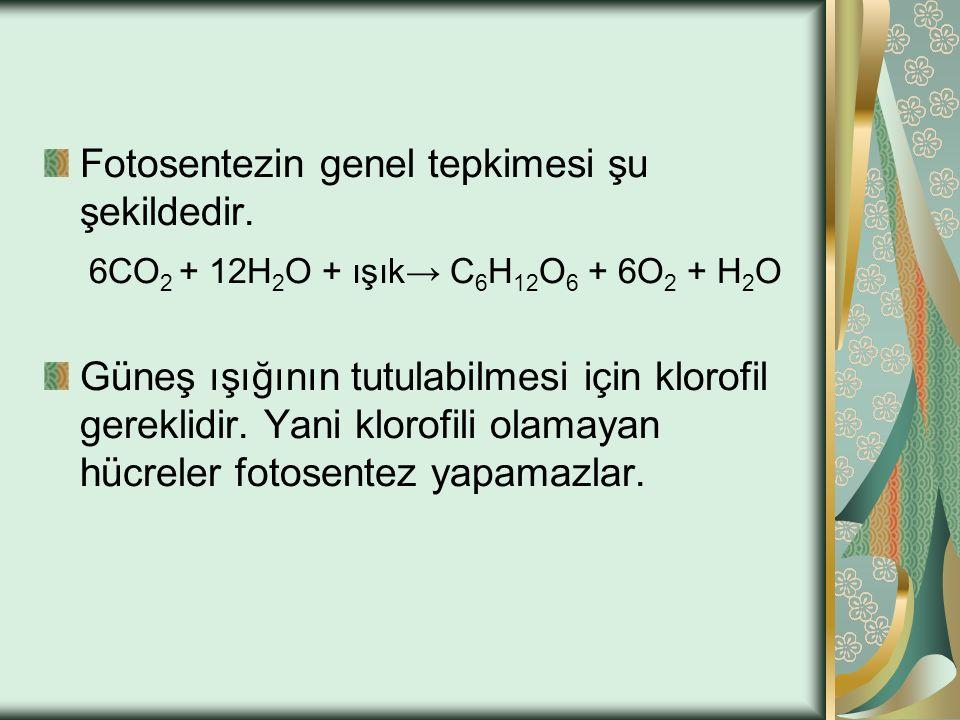 Fotosentezin genel tepkimesi şu şekildedir. 6CO 2 + 12H 2 O + ışık→ C 6 H 12 O 6 + 6O 2 + H 2 O Güneş ışığının tutulabilmesi için klorofil gereklidir.
