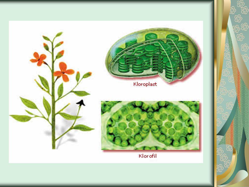 Fotosentez, besin zincirinin ilk ayağını oluşturur.