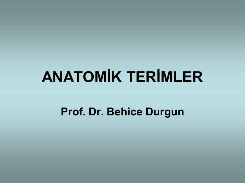 ANATOMİK TERİMLER Prof. Dr. Behice Durgun
