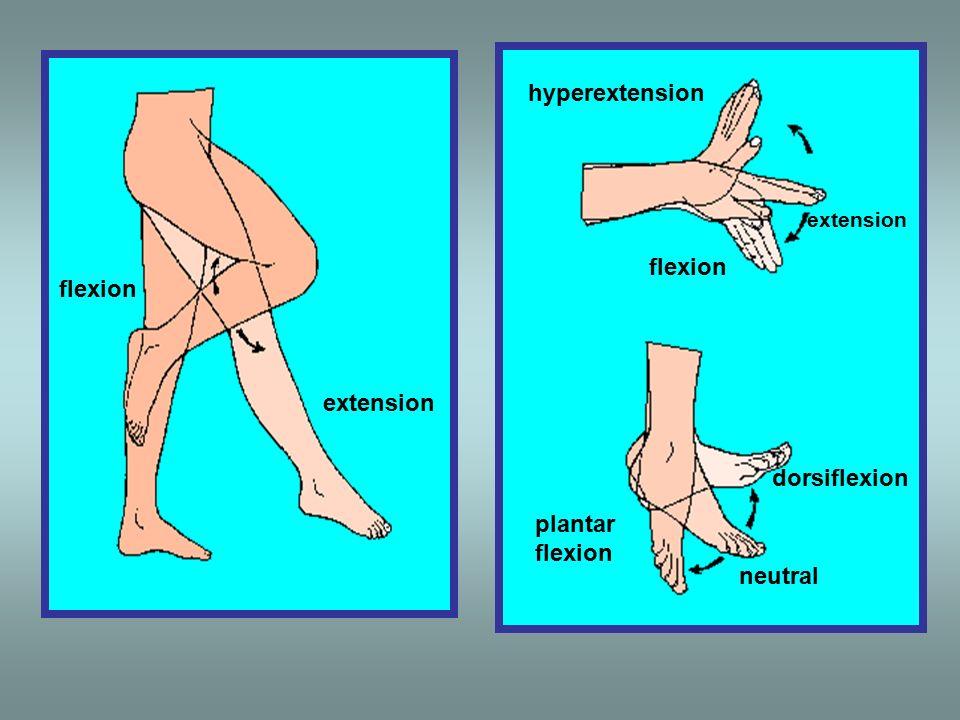 flexion extension hyperextension flexion dorsiflexion plantar flexion neutral extension