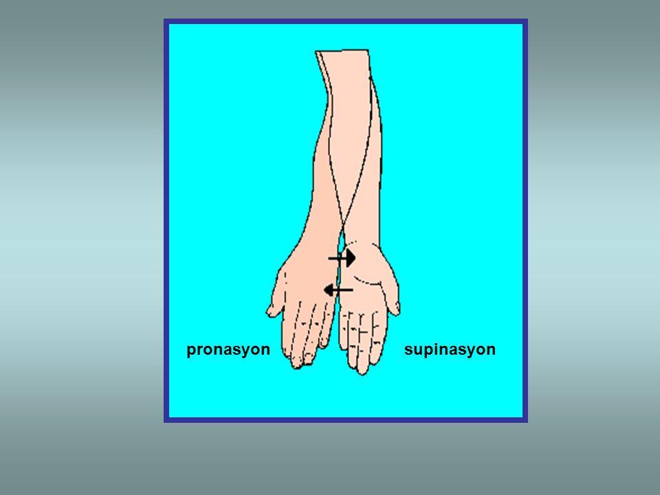 pronasyonsupinasyon