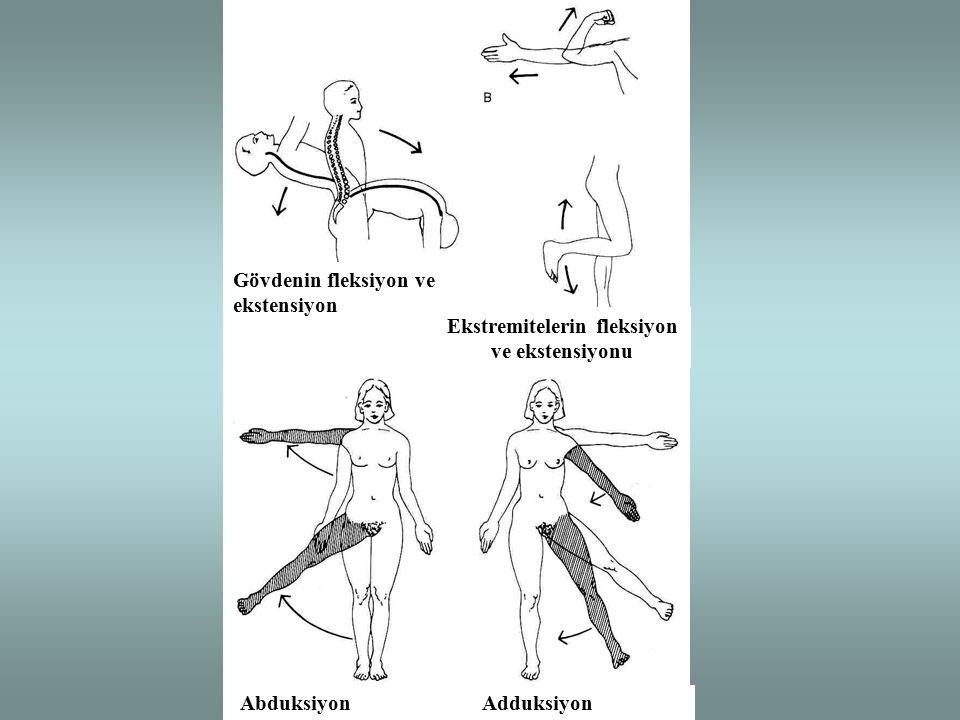 Gövdenin fleksiyon ve ekstensiyon Ekstremitelerin fleksiyon ve ekstensiyonu Abduksiyon Adduksiyon