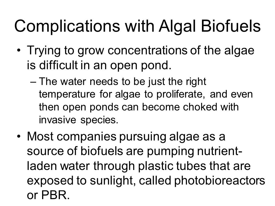 Complications with Algal Biofuels Trying to grow concentrations of the algae is difficult in an open pond.