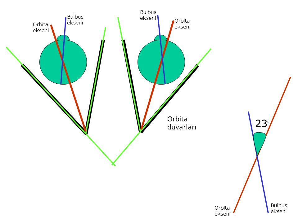 Orbita ekseni Orbita ekseni Bulbus ekseni Bulbus ekseni Orbita duvarları 23 O Orbita ekseni Bulbus ekseni