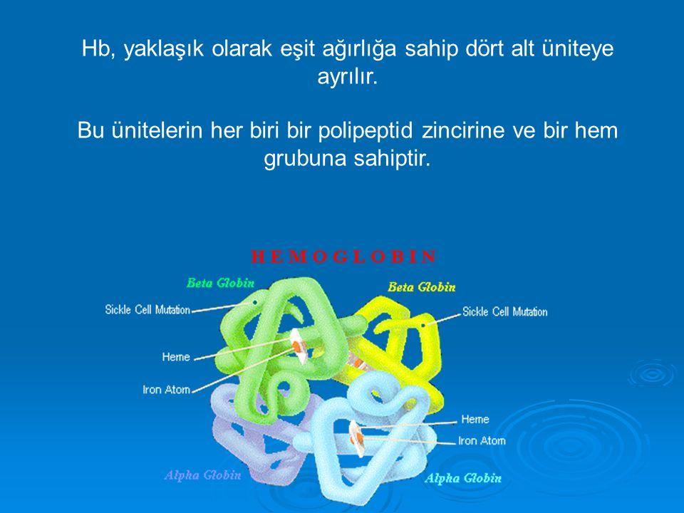 Hb, yaklaşık olarak eşit ağırlığa sahip dört alt üniteye ayrılır. Bu ünitelerin her biri bir polipeptid zincirine ve bir hem grubuna sahiptir.