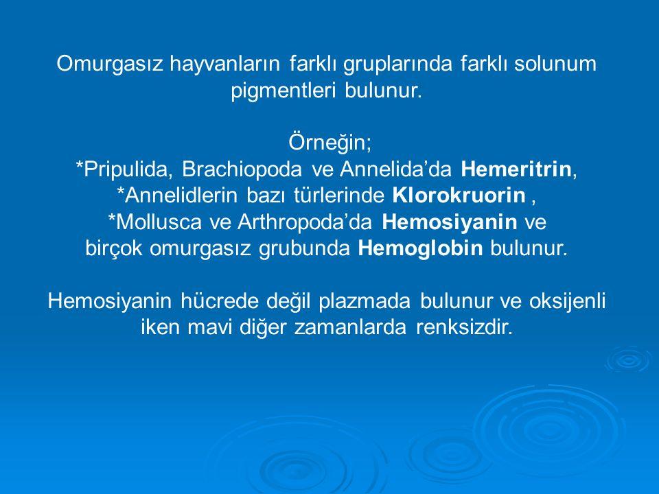 Omurgasız hayvanların farklı gruplarında farklı solunum pigmentleri bulunur. Örneğin; *Pripulida, Brachiopoda ve Annelida'da Hemeritrin, *Annelidlerin