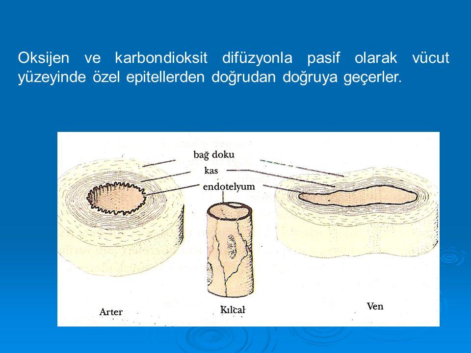 Oksijen ve karbondioksit difüzyonla pasif olarak vücut yüzeyinde özel epitellerden doğrudan doğruya geçerler.