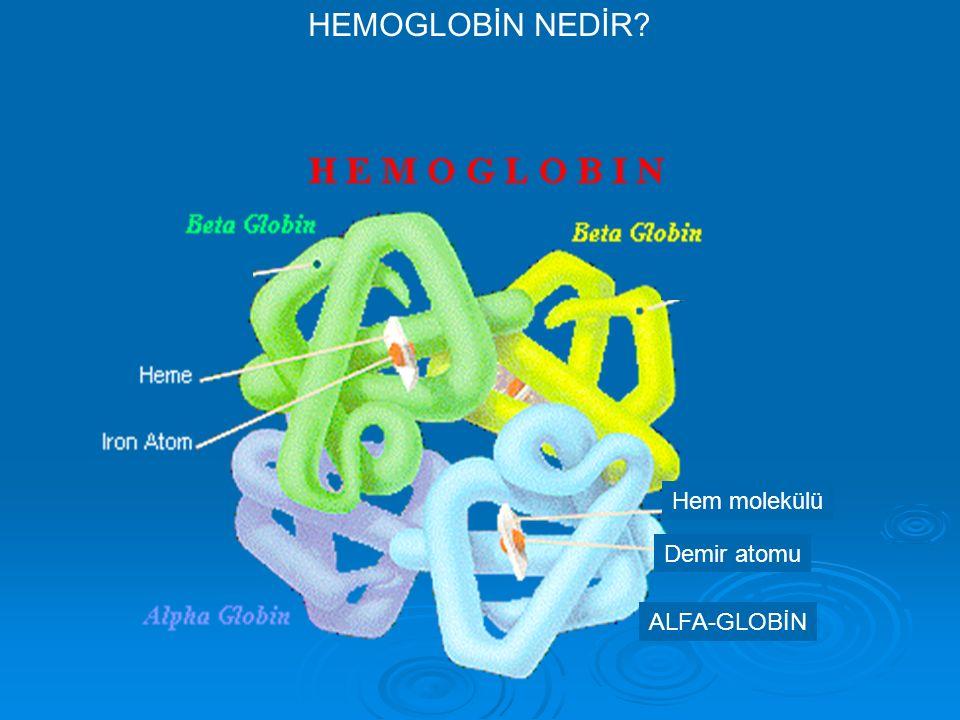 HEMOGLOBİN NEDİR Hem molekülü Demir atomu ALFA-GLOBİN