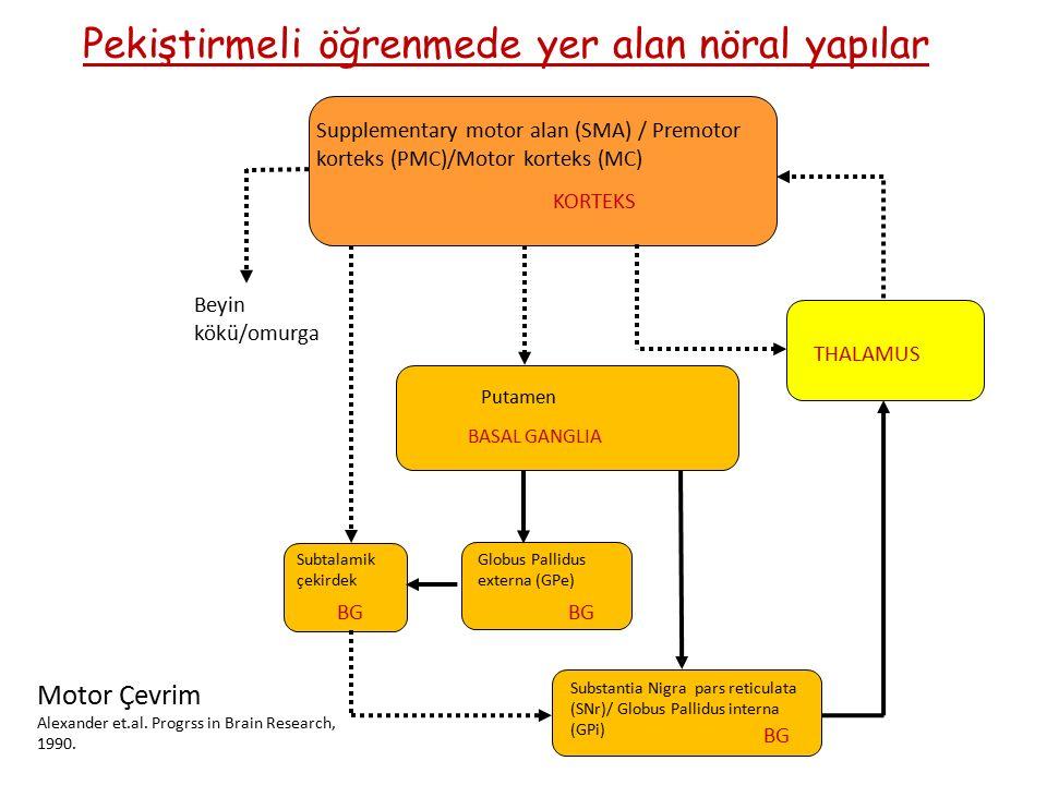 Pekiştirmeli öğrenmede yer alan nöral yapılar Supplementary motor alan (SMA) / Premotor korteks (PMC)/Motor korteks (MC) KORTEKS THALAMUS BASAL GANGLIA BG Globus Pallidus externa (GPe) Putamen Subtalamik çekirdek Beyin kökü/omurga BG Substantia Nigra pars reticulata (SNr)/ Globus Pallidus interna (GPi) Motor Çevrim Alexander et.al.