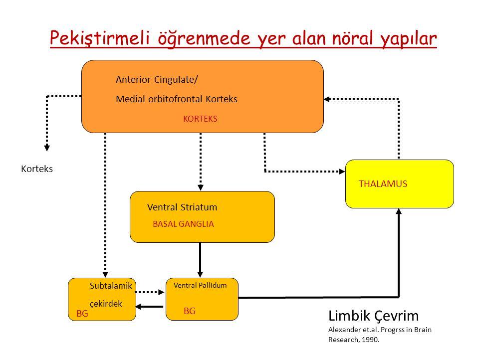 Pekiştirmeli öğrenmede yer alan nöral yapılar Anterior Cingulate/ Medial orbitofrontal Korteks KORTEKS THALAMUS BASAL GANGLIA BG Ventral Pallidum Ventral Striatum Subtalamik çekirdek Korteks Limbik Çevrim Alexander et.al.