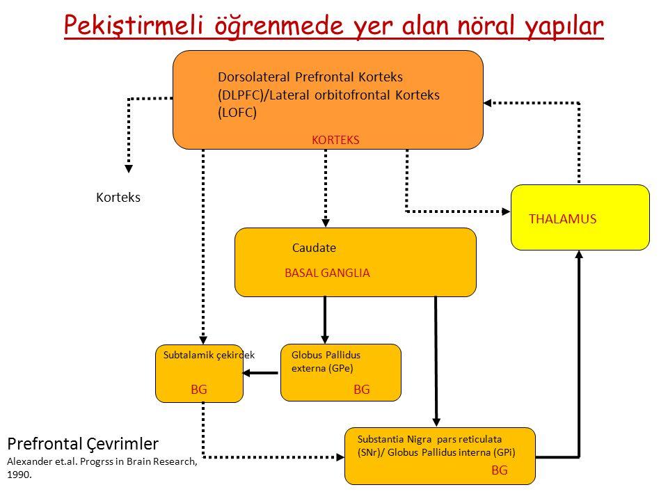 Pekiştirmeli öğrenmede yer alan nöral yapılar Dorsolateral Prefrontal Korteks (DLPFC)/Lateral orbitofrontal Korteks (LOFC) KORTEKS THALAMUS BASAL GANGLIA BG Globus Pallidus externa (GPe) Caudate Subtalamik çekirdek Korteks BG Substantia Nigra pars reticulata (SNr)/ Globus Pallidus interna (GPi) Prefrontal Çevrimler Alexander et.al.