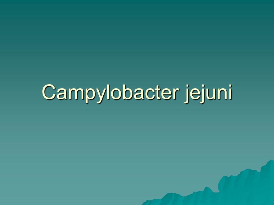 Campylobacter jejuni Genel Özellikleri  Gram negatif  S veya virgül seklinde basiller  Polar monotrişiyöz flagellaları ile hareket ederler  Hücreye yerleşimi ekstrasellüler  Kapsül ve glikokaliks yoktur
