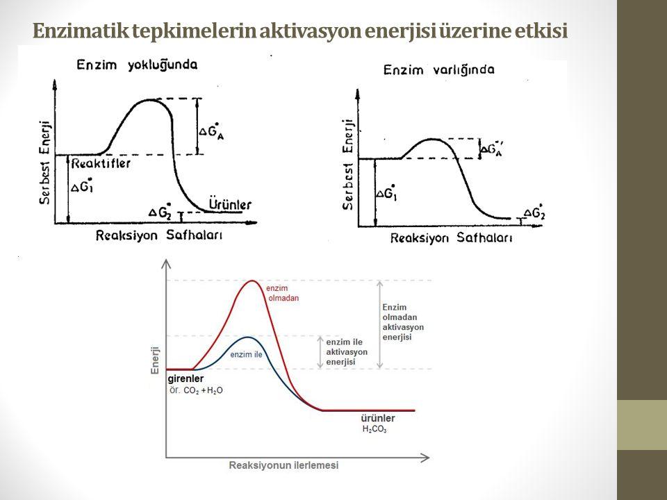 Enzimatik tepkimelerin aktivasyon enerjisi üzerine etkisi