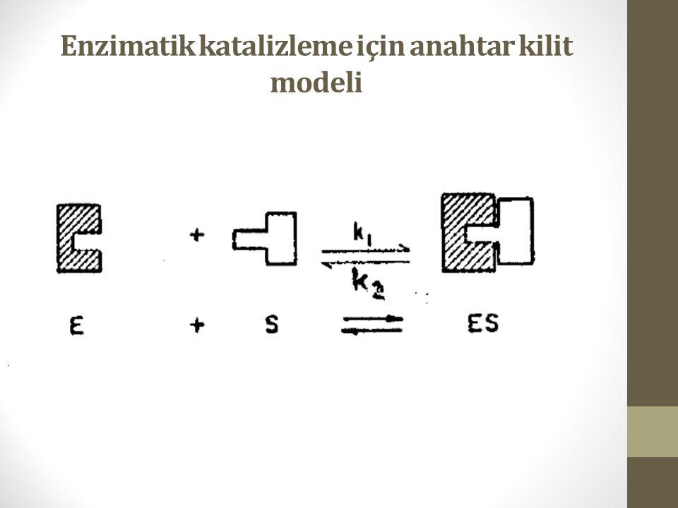 Enzimatik katalizleme için anahtar kilit modeli
