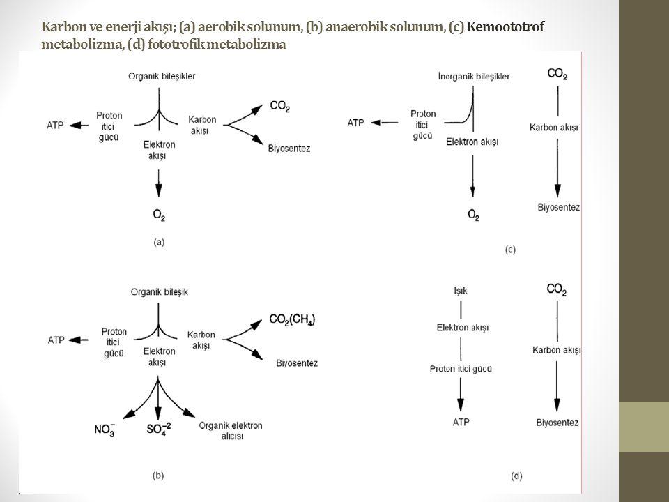 Karbon ve enerji akışı; (a) aerobik solunum, (b) anaerobik solunum, (c) Kemoototrof metabolizma, (d) fototrofik metabolizma