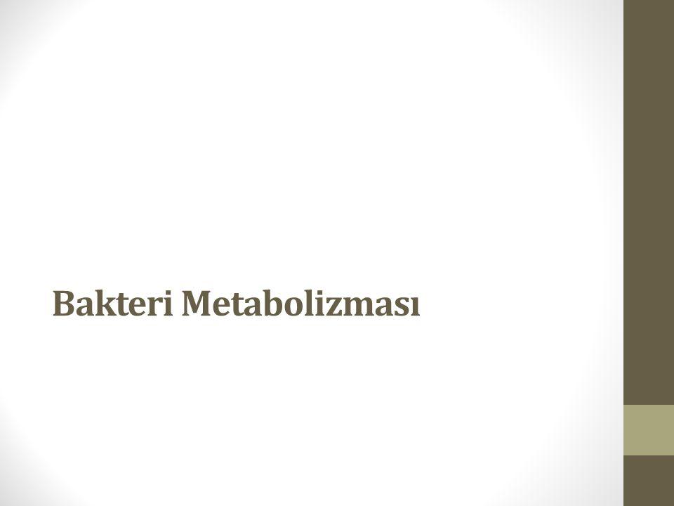 Bakteri Metabolizması