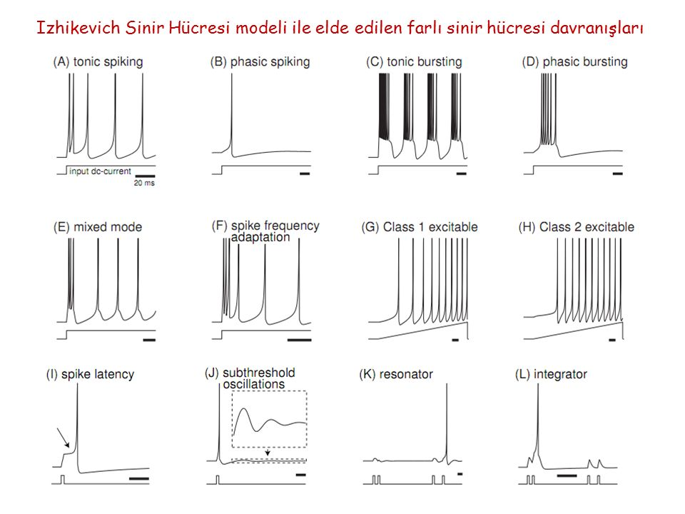 Izhikevich Sinir Hücresi modeli ile elde edilen farlı sinir hücresi davranışları