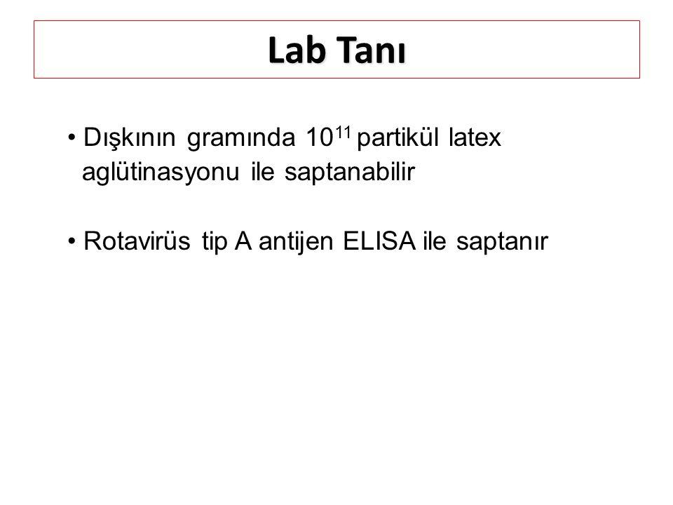 Lab Tanı Dışkının gramında 10 11 partikül latex aglütinasyonu ile saptanabilir Rotavirüs tip A antijen ELISA ile saptanır