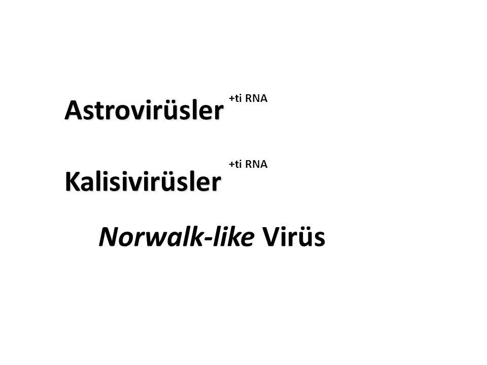Astrovirüsler Kalisivirüsler Astrovirüsler Kalisivirüsler Norwalk-like Virüs +ti RNA