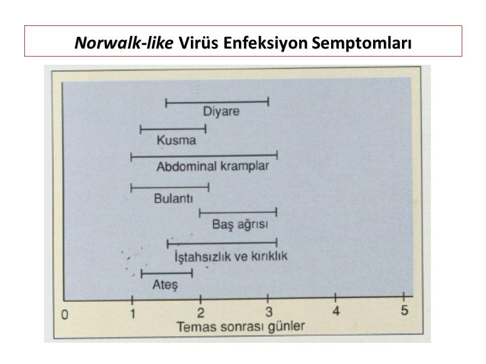 Norwalk-like Virüs Enfeksiyon Semptomları