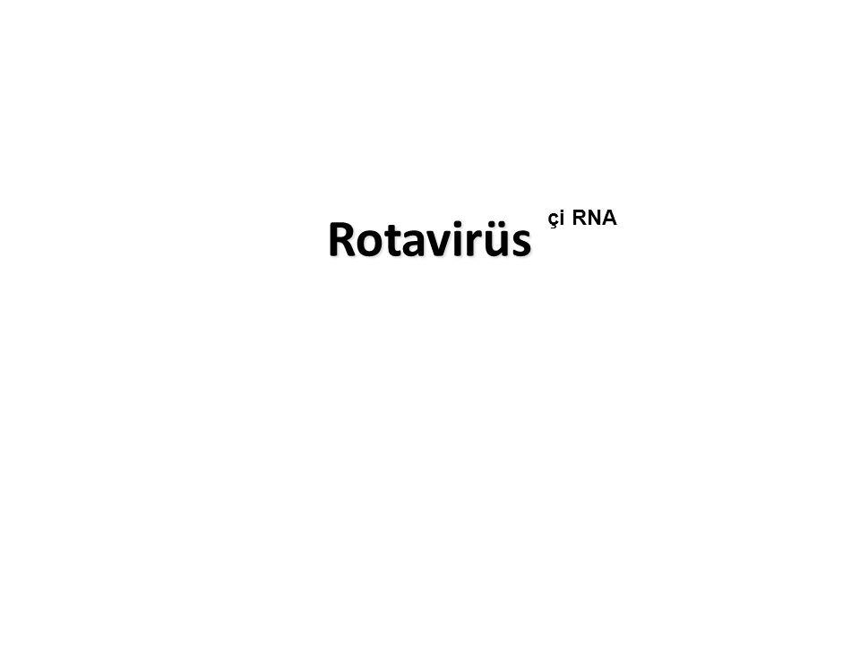 Kalisi virüslerden Norwalk-benzeri Virüs Yayılma fekal-oral Epidemik salgınlar yapar Enfeksiyon erişkinlerde çocuklardan daha sıktır Deniz kabukluları ve diğer yiyecekler enfeksiyon kaynağı Bulantı ön planda, ishal hafif Antikor pozitifliği ileri yaşlarda, >50 yaş antikor pozitifliği %50 Tanı, dışkıda PCR Prof.Dr.Şaban Çavuşlu ders slaytından derlenmiştir