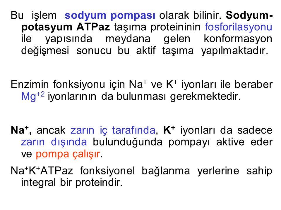 Bu işlem sodyum pompası olarak bilinir. Sodyum- potasyum ATPaz taşıma proteininin fosforilasyonu ile yapısında meydana gelen konformasyon değişmesi so